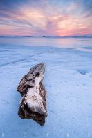Frozen Driftwood by leavenotrase