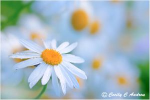 Oh How I Love The Daisy by CecilyAndreuArtwork