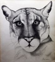 Cougar by whsprluv69