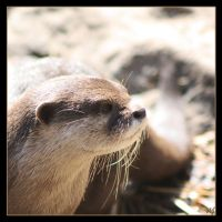 Otter 4 by Globaludodesign