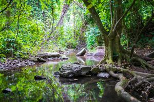 Jungle Stream Background Stock by little-spacey