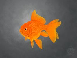 Why are Goldfish Always Grumpy? by Bueshang