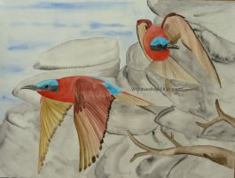 Southern Carmine Bee-eaters by Woodswallow