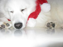 Christmas snooze colour by poodlechen