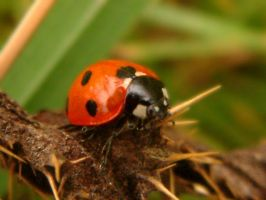 our lady bird by Batteryhq