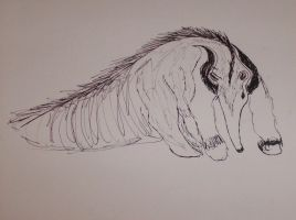 anteater by CaledonCat