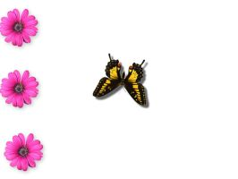 Butterfly with pink flowers by jackiesc
