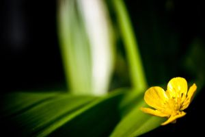 green and yellow by DanielGliese
