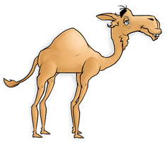 Camel by Keisarinvaimo