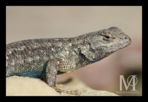 Lizard Close Up by microcosmos