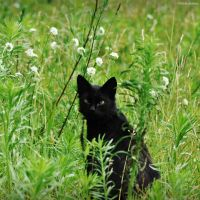 I Spot Black Amidst The Green by LindaMarieAnson