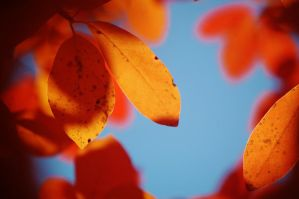 Fall Leaves 6 by nazzara