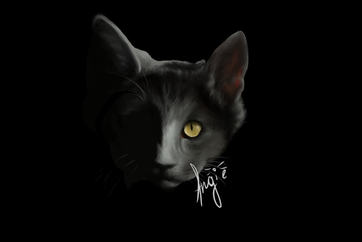 Catsperiment by Angie-TheCat