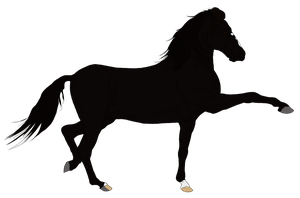 Andalusian Auction Horse 2 by HoofHaven