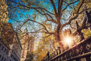 New York early in the morning by Torsten-Hufsky