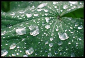 water drops by fraserw2
