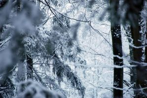 winter impression by Wilithin
