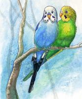 Budgie Buddies by maggock
