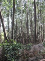 Nature - Forest 1 by Stock-gallery