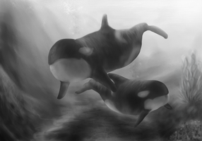 Orcas by animalartist16