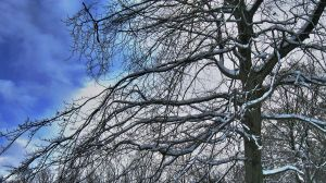 Tree, snow and blue skies by ProbablyThePenguin