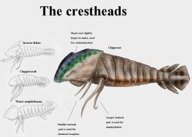 REP: The crestheads by Ramul