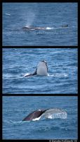 Whale Watching by TVD-Photography