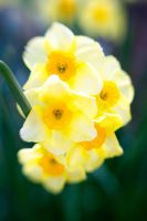 Narcissus II by LDFranklin