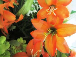 Orange Flowers by quickwing23