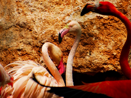 Pafos Zoo -12- by IoannisCleary