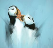 Puffin by DM7