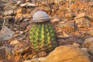 Cactus by danette54