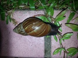 Snail 14Aug2014 8 by RiverKpocc