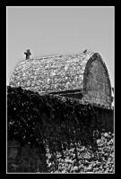 Church roof. Provence. France by jennystokes