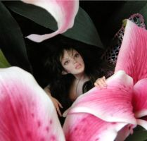 Stargazer Lily Faerie - face by wingdthing