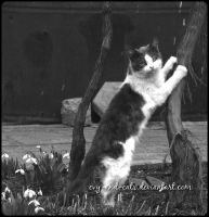 726 by evy-and-cats