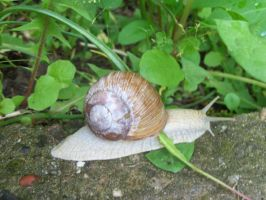 My pet snail by Mecarion