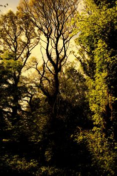 CANNOT SEE THE TREE FOR THE WOODS by Hunnichild