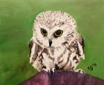 Saw-whet Owl by CarolynYM