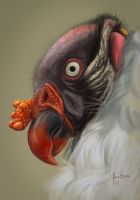 King Vulture Study by Whiteparasite