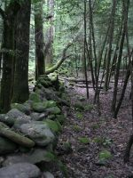 The Wall In The Forest by photowizard
