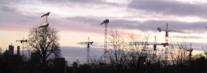 Cranes At Dawn by Neale