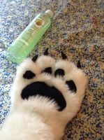 Paws by hitsong955