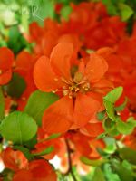 from Orange to Red by ad-shor