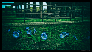 Viking Village Flowers by Vaskania