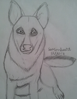 german shepard by wolf-star-studios