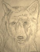 Wolf by afoulke169