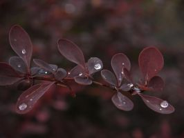 Leaves and Raindrops VIII by Softspoken-One