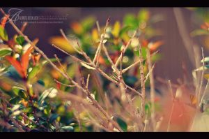 ReGrowth by enemia