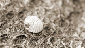 The Small Shell by brentonbiggs